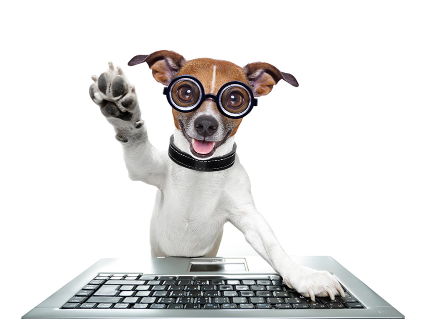 10 sites para estudar gratuitamente para concurso