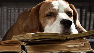 Como gostar de ler
